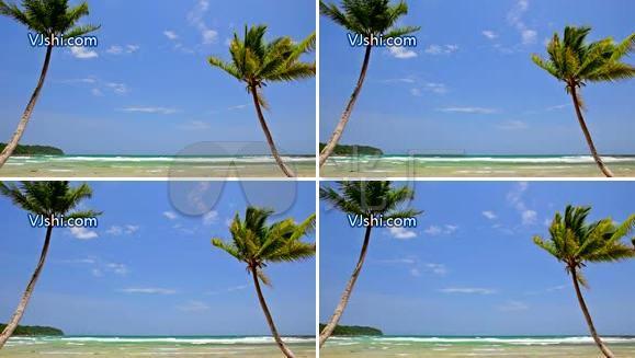 夏威夷 热带风情 海滩