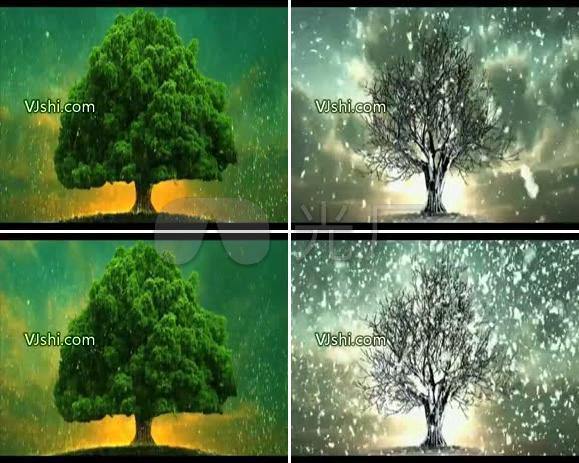 枯木逢春 四季之树