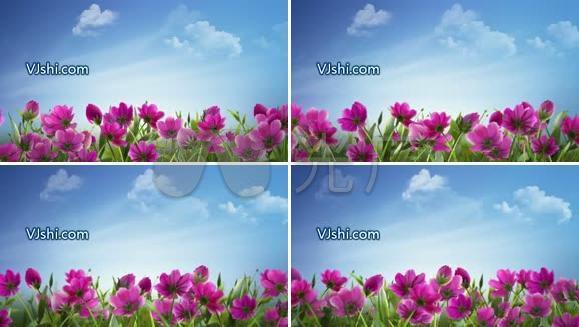 很赞的鲜花背景 演出视频背景