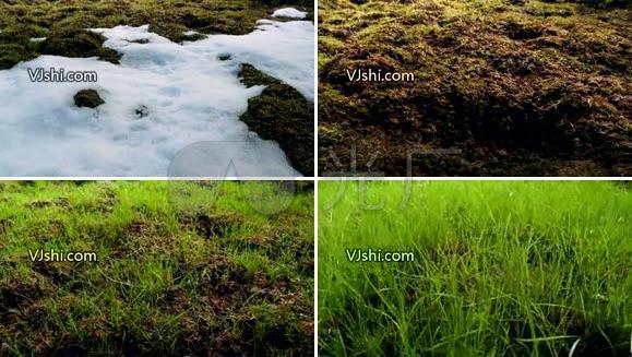雪融化草生长