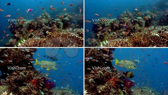 海底世界 珊瑚 鱼