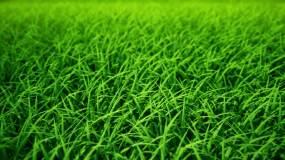 草丛 绿草 嫩草 草地