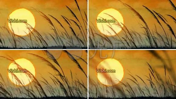 芦苇丛 秋色黄昏 秋天 日落 苍凉大地