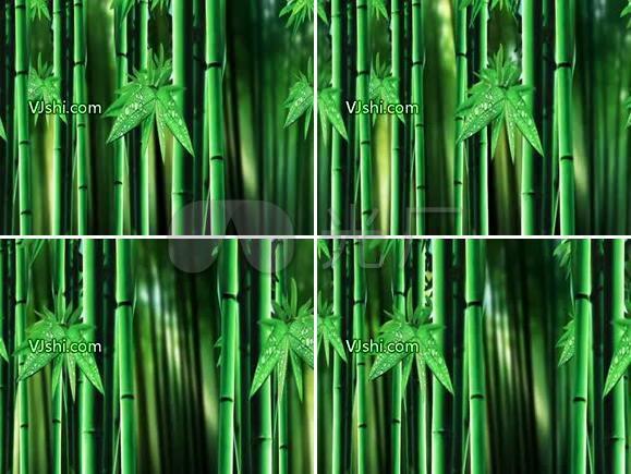 竹子 竹林