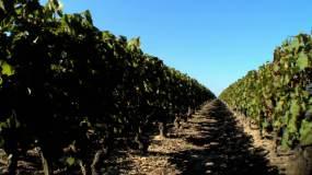 葡萄园 红酒 葡萄酒