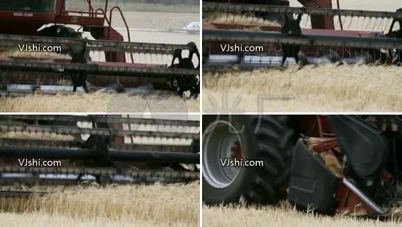 农业生产 收割机 小麦 大米 丰收
