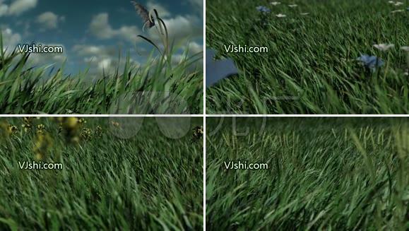 草地草丛绿草春天春光春风视频素材vj背景