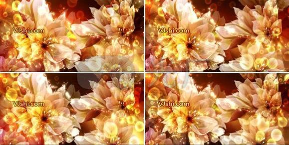 绚丽花朵鲜花转动