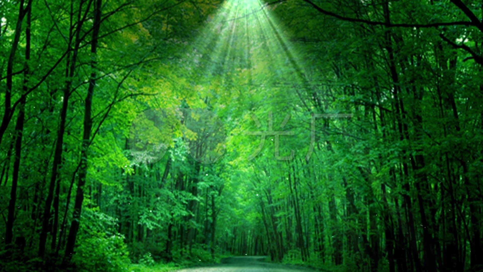 绿色森林大屏幕素材_1920x1080_高清视频素材下载(:)图片