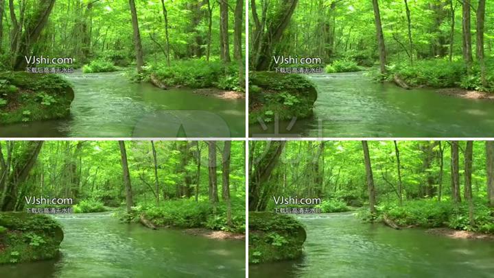小溪溪水树叶阳光明媚山林绿色春天春意盎然 【声明】vj师网所有原创