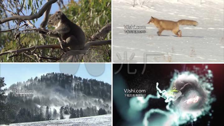 野生动物世界食物链