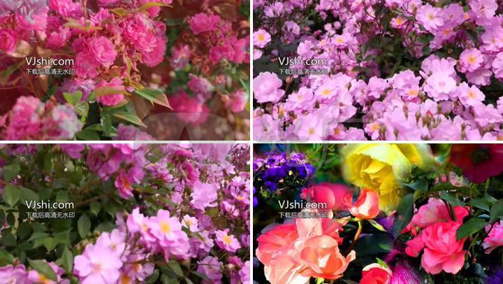 花海花园花丛花卉鲜花花朵唯美美艳玫瑰花园牡丹花园舞会背景歌舞