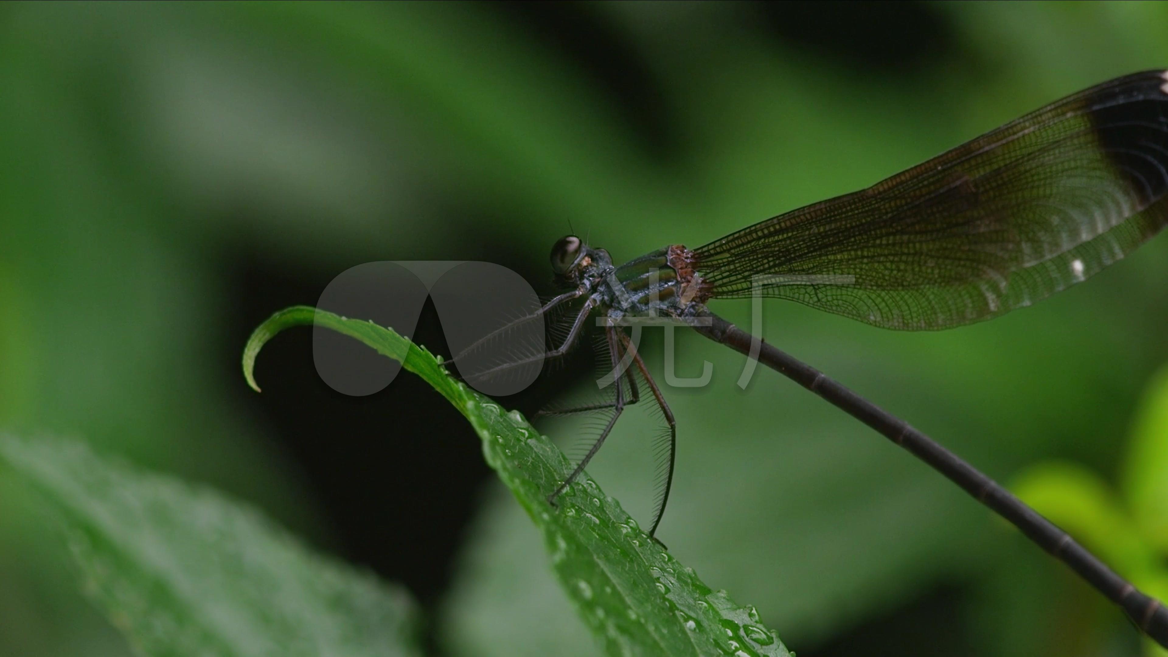 微距蜜蜂微型动物鸟,世界鲨鱼4k简体画绿色图片