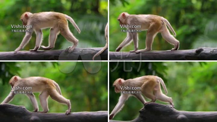 动物园猴子