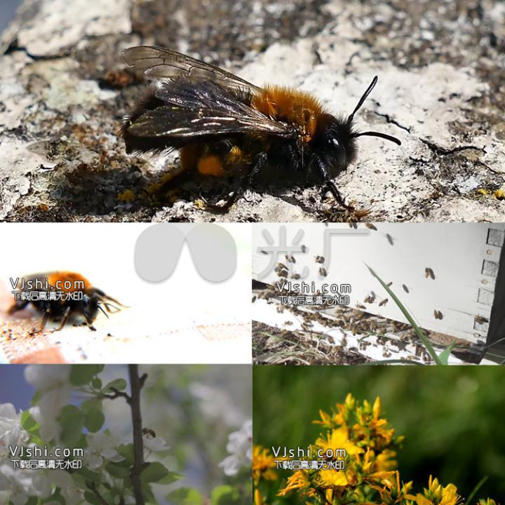 动物小鸟蜜蜂10块钱那小鹦鹉能孵昆虫么图片
