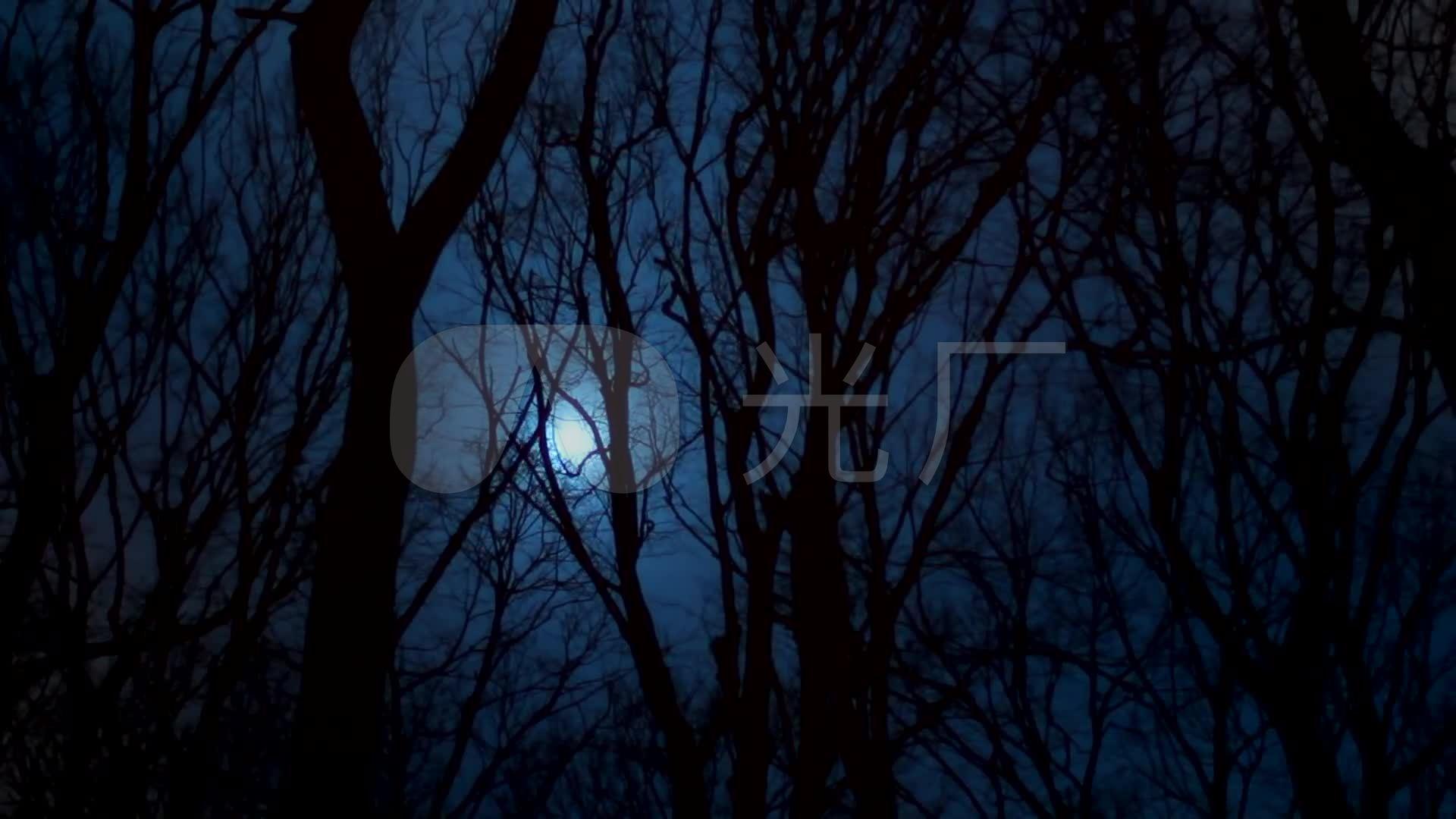 夜晚黑色森林刮风阴森恐怖效果_1920X1080_高清视频素材下载(编号:772205)_实拍视频