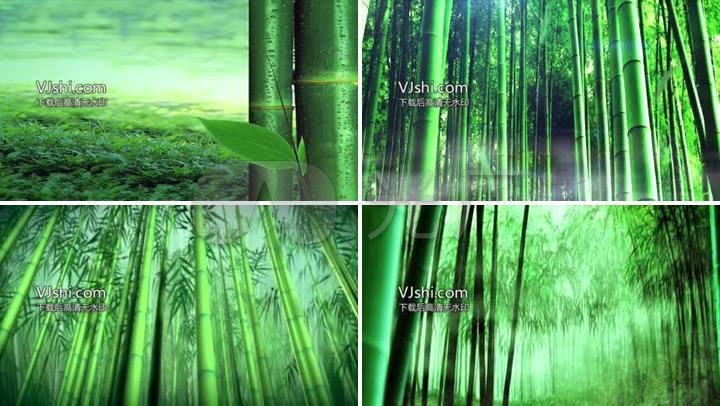 唯美青竹幽静雨中竹林高清视频素材