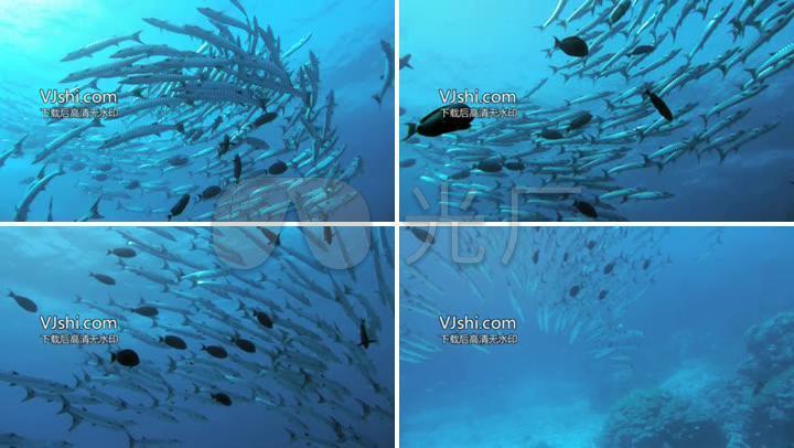 深海鱼群意境素材