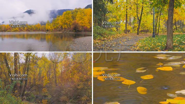 山林小路落叶水鸟河水