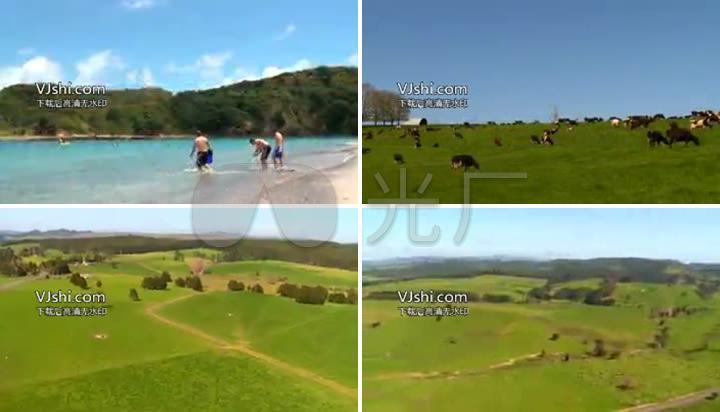 新西兰落叶草原v落叶风光视频_无_6下载(编号:农场奶牛图片