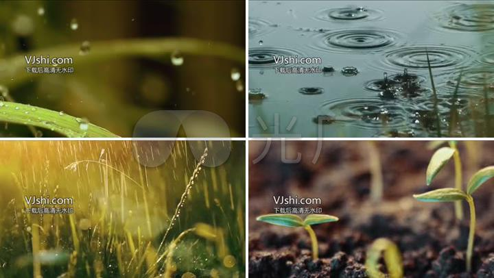 雨水雨滴浇灌嫩芽生长