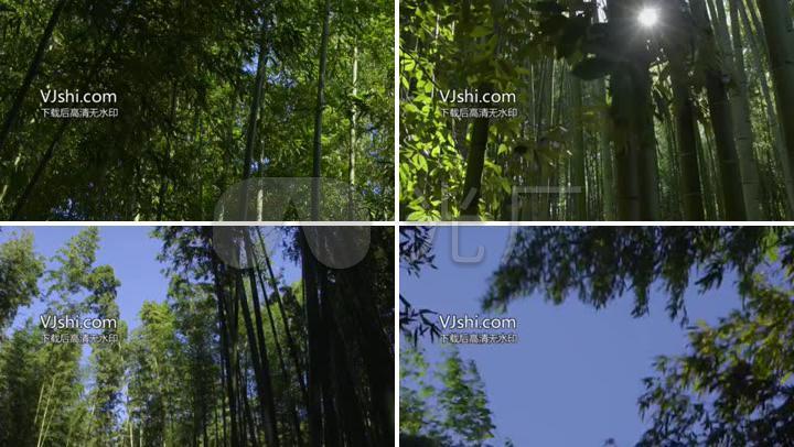 CS067绿色竹林风光竹子林区风景唯美镜