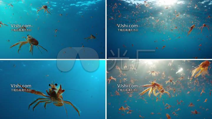 海虾龙虾虾虾群