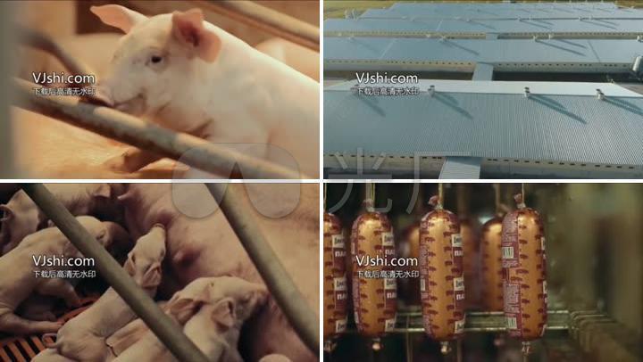 猪场养殖猪肉加工到销售渠道