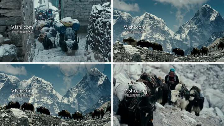高原雪山的牛拖货物