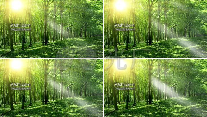 原始森林梦幻led背景素材图片