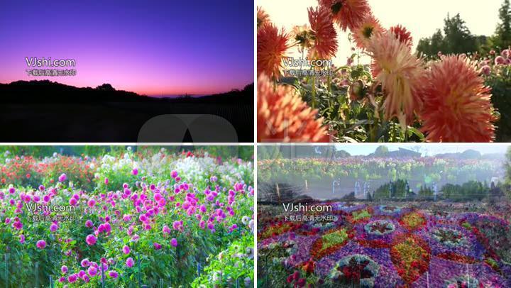 群山山谷鲜花花海五颜六色