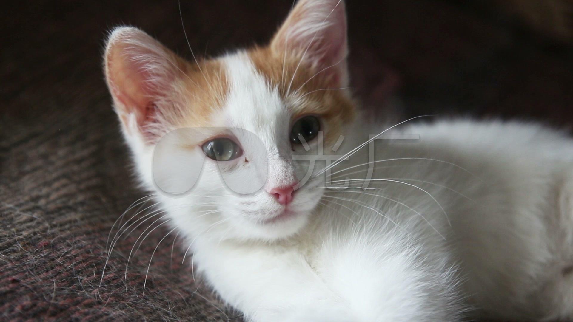可爱小猫猫_1920x1080_高清视频素材下载(编号:)_实拍