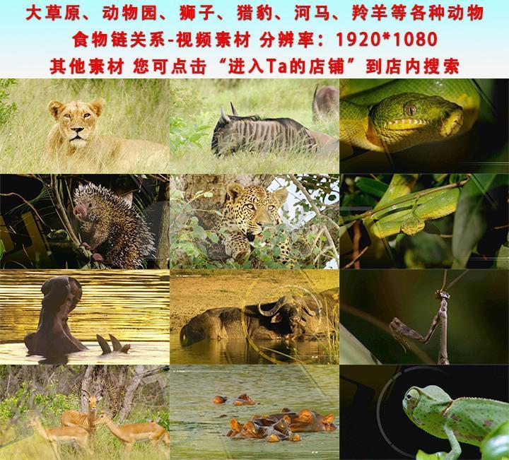 大草原各种动物食物链