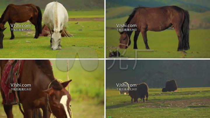 蒙古卤水素材放牧_1920X1080_草原视频视频高清制作马匹图片