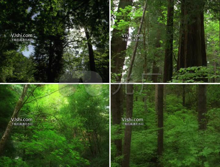 自然风景生态保护护林绿植阳光照进树林绿化小树林树干树木树枝绿叶