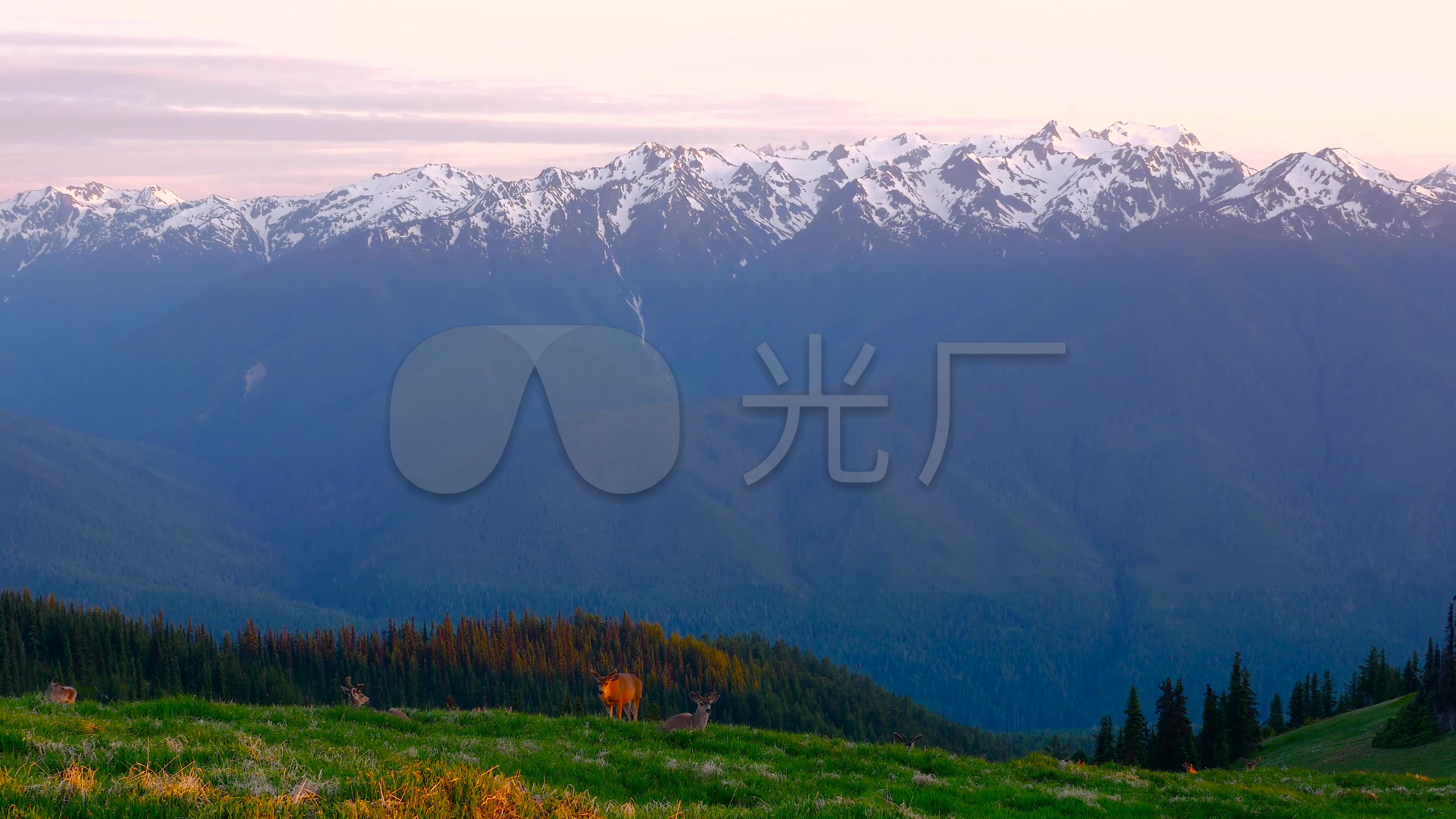 美丽大自然草原风景雪山视频_3840X2160_高法国小鹿图片