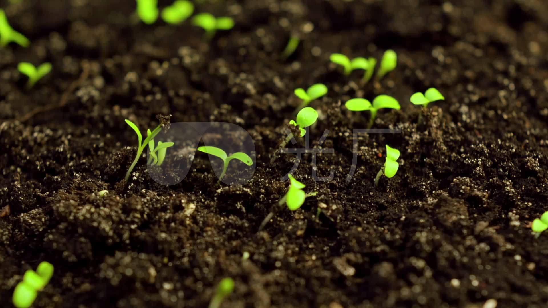 滋润植物小草发芽生长的视频素材_1920x1080_高清视频
