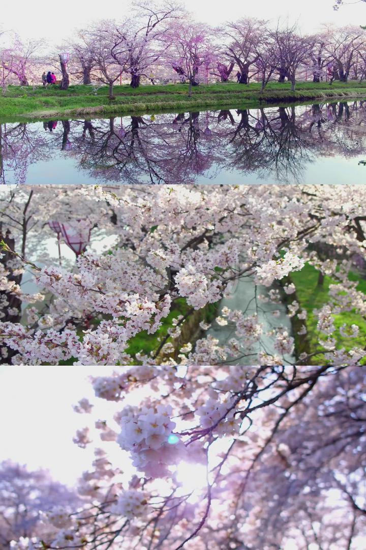 小清新阳光穿过树梢春暖花开