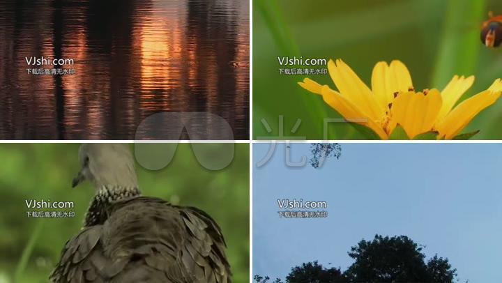 视频实拍蚂蚁表情新加坡野生动物鸟蜜蜂高清鳄鱼拍水素材包gif