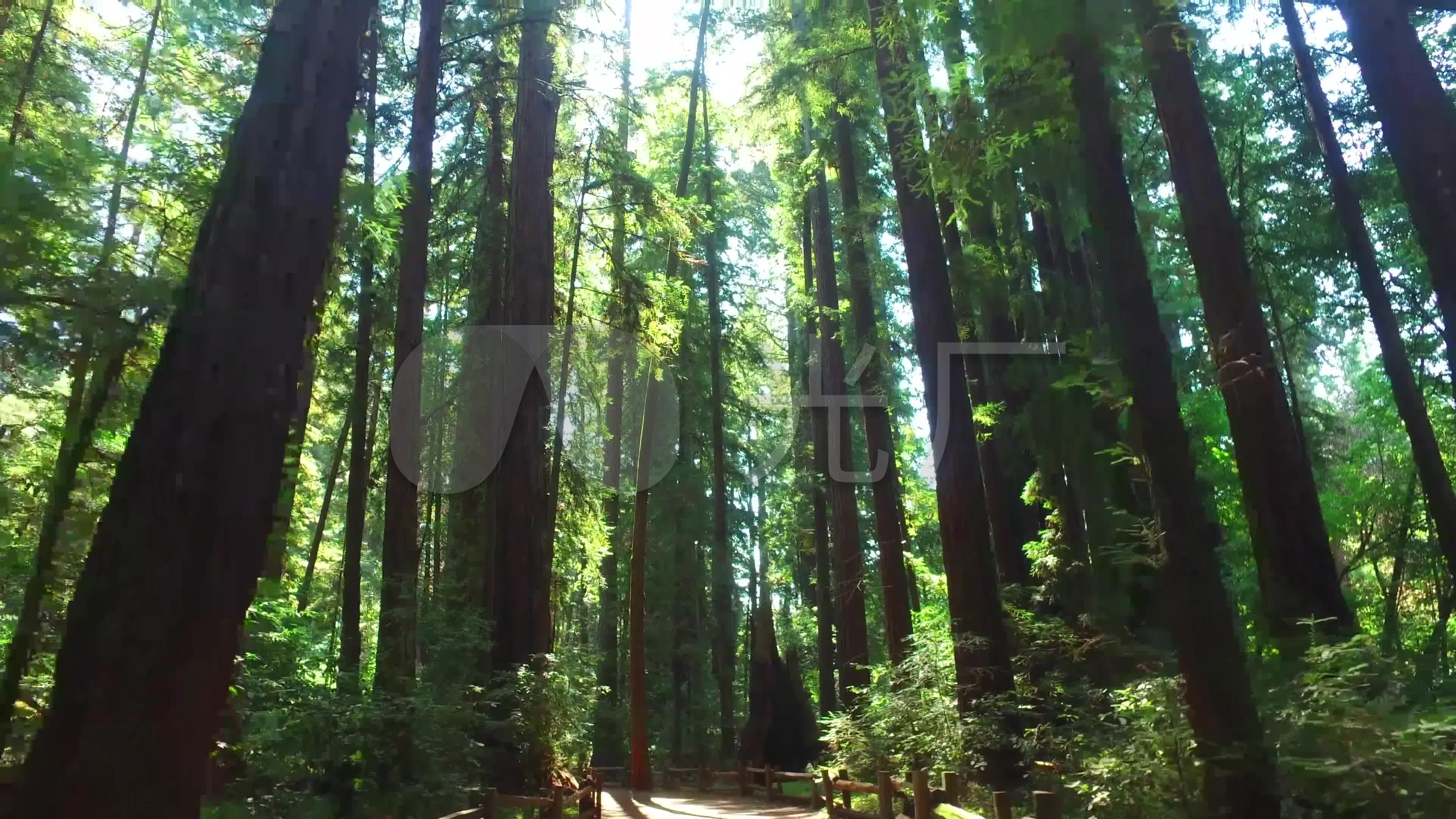 4k实拍森林素材_3840x2160_高清视频素材下载(编号:)图片