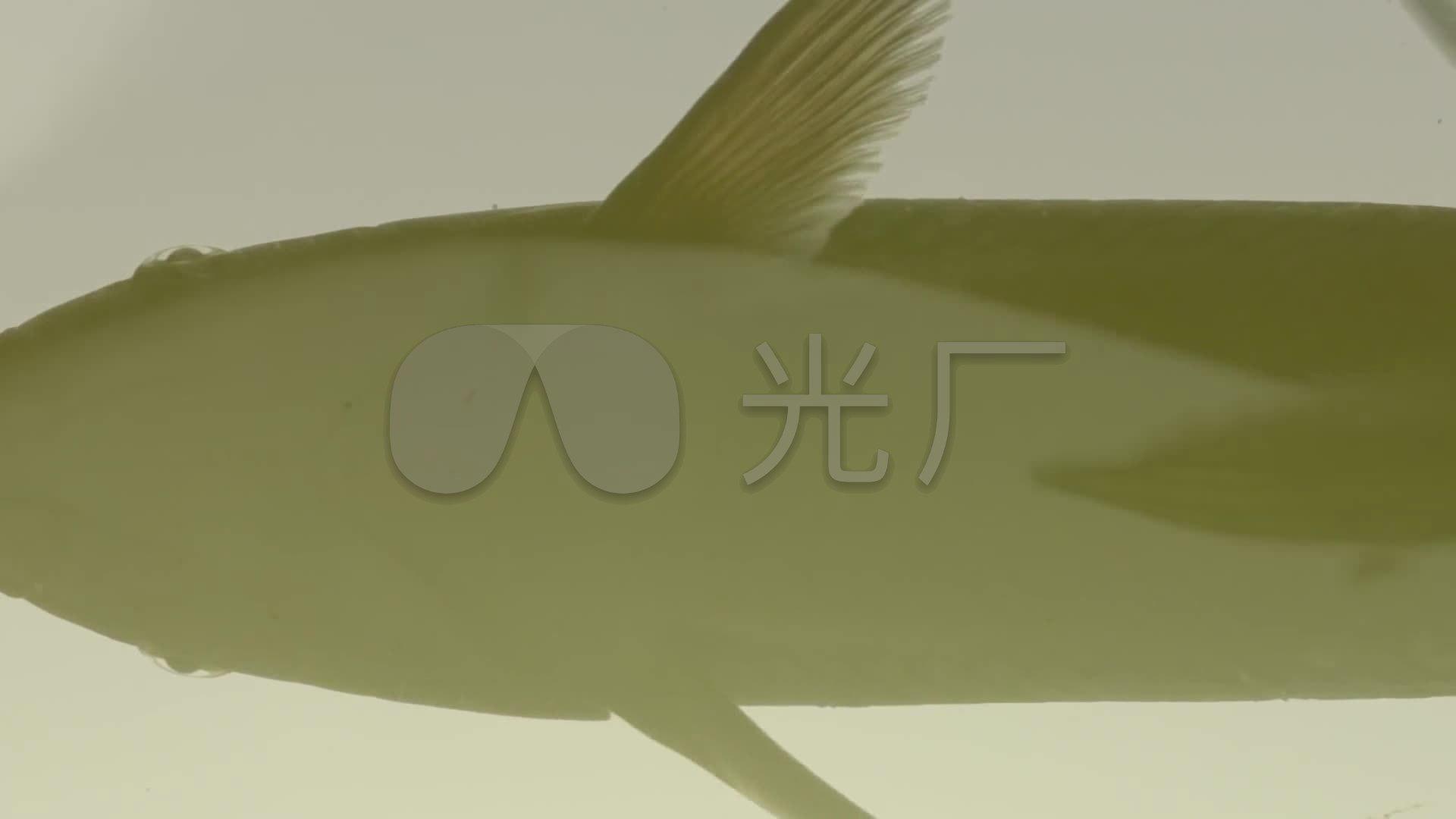素材高清养鱼_1920X1080_农村视频特权下载网鱼塘视频图片
