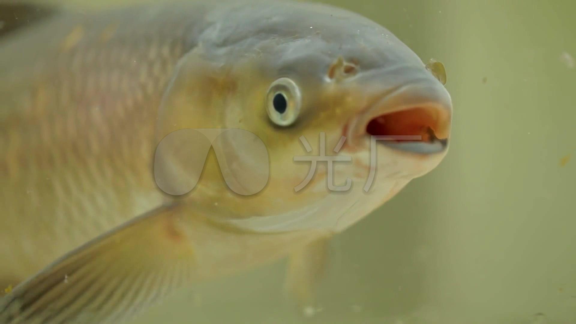 视频高清养鱼_1920X1080_洗发鱼塘素材下载v视频农村视频图片