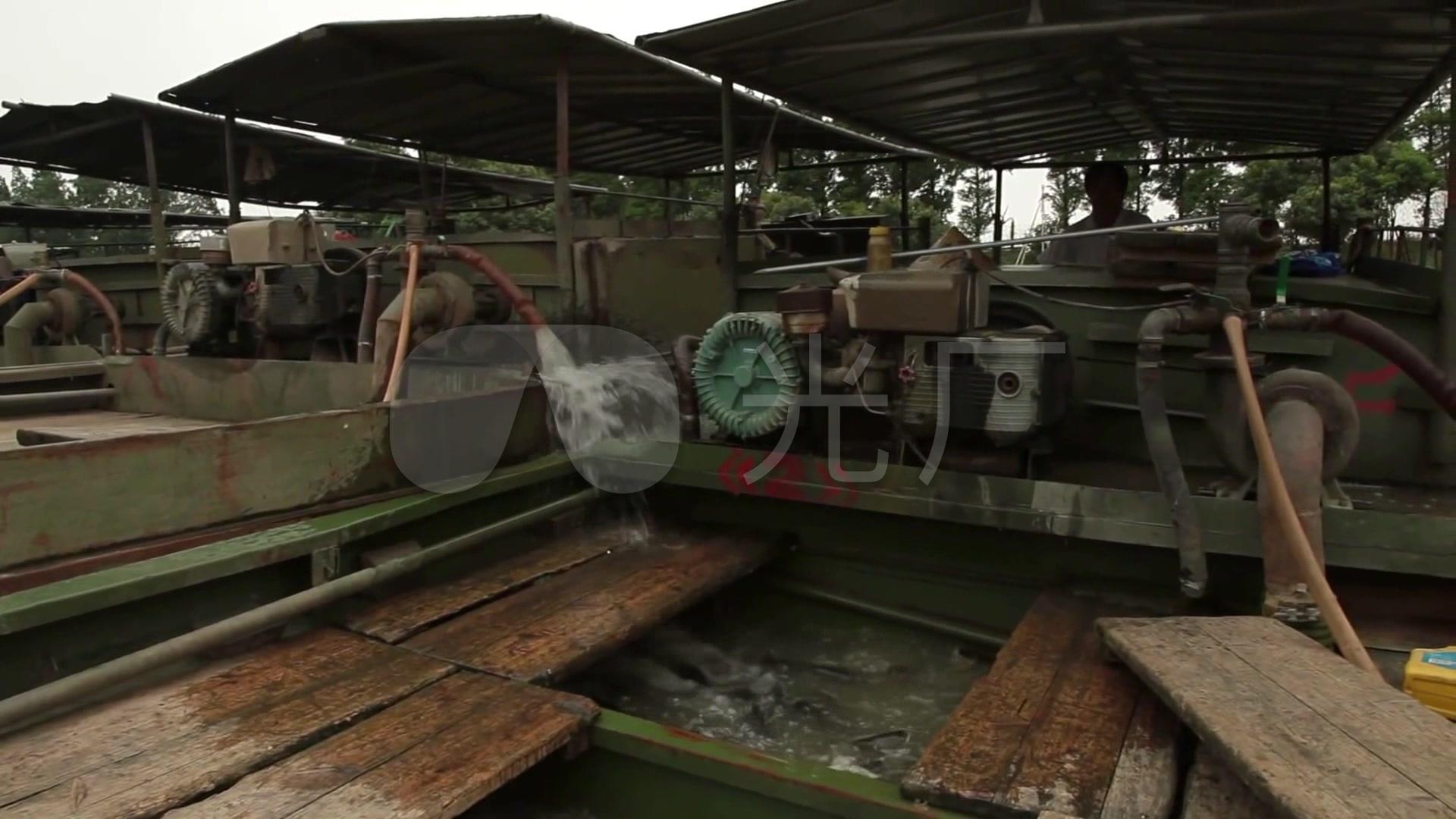 高清视频养鱼_1920X1080_鱼塘农村素材下载酥炖肉视频图片