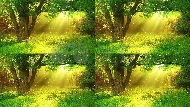 绿色森林树林阳光led舞台背景图片
