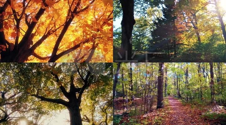 优美的秋天树木树叶风景