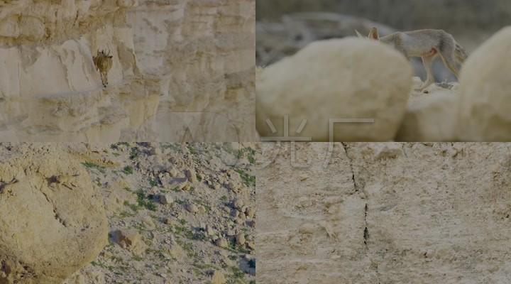 动物世界纪录片岩羊动物保护宣传视频素材