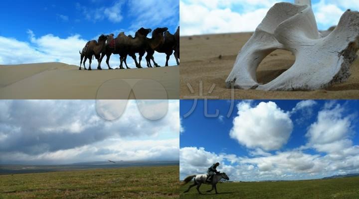蒙古视频草原高清v视频_1920X1080_手机雄鹰骆驼录影视频图片