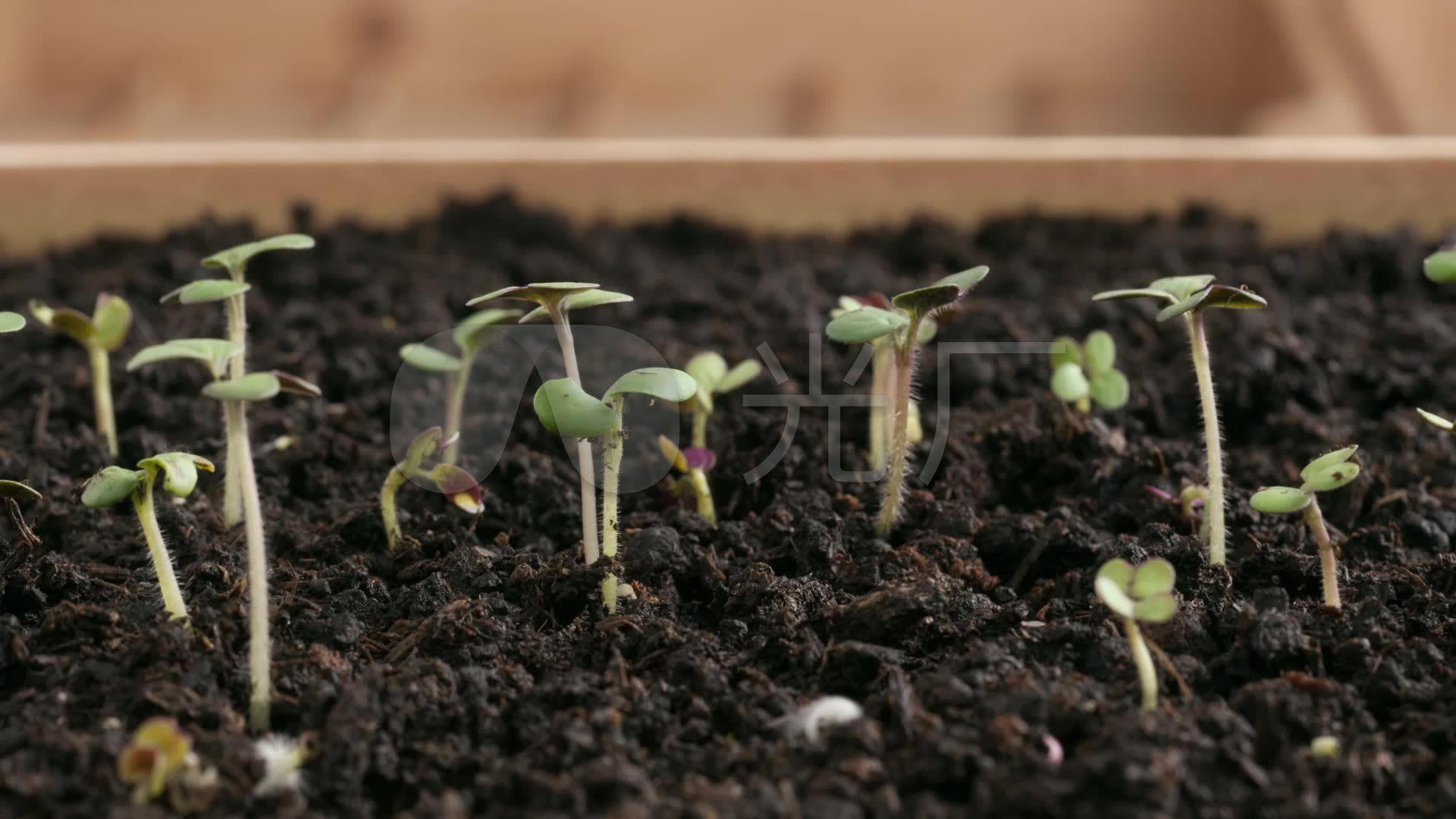 小草发芽植物生长