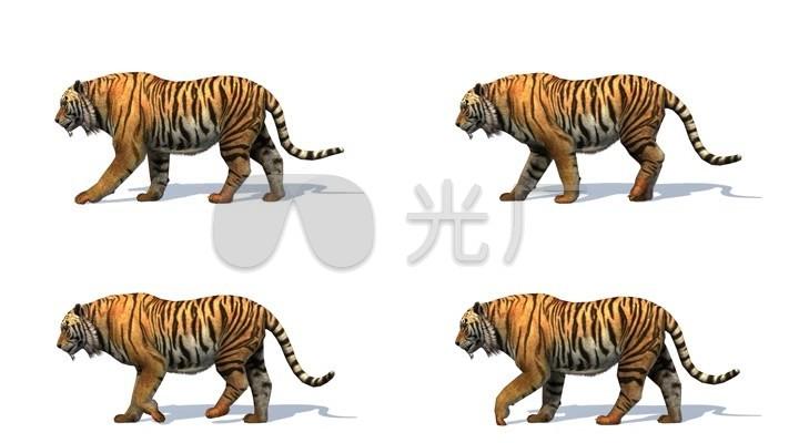 动物走路的姿势