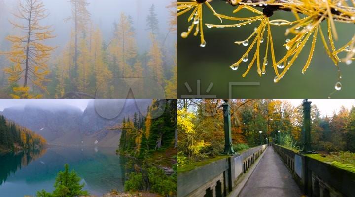 唯美秋天森林大树大自然风景视频素